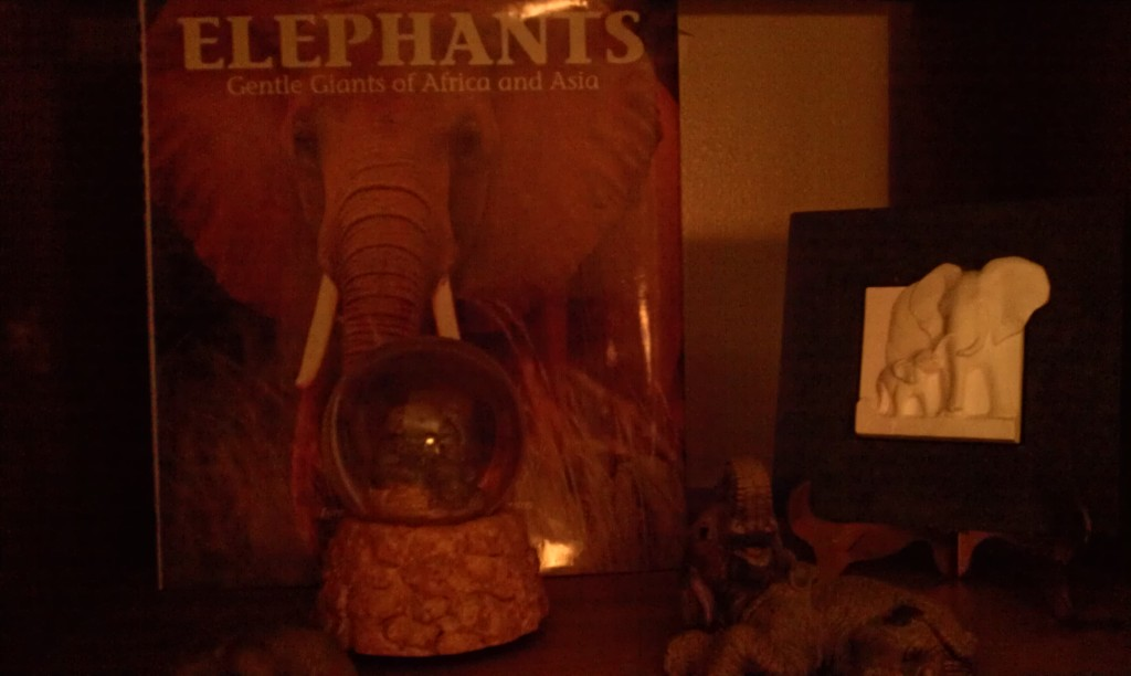 Some of my cherished elephant collection